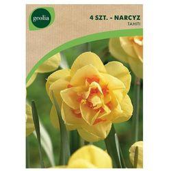 Narcyz pełny TAHITI 4 szt. cebulki kwiatów GEOLIA