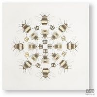 Obrazy, Obraz Kalejdoskop – Beautiful Bees 105872 Graham&Brown