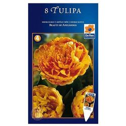 Tulipan Beauty od Apeldo