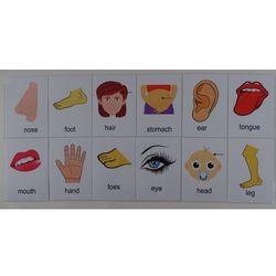 Części ciała karty edukacyjne - wersja w. j. angielskim