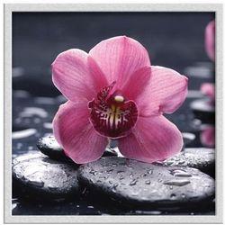 Obraz 30 x 30 cm Różowy storczyk